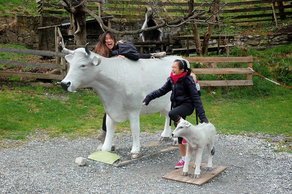 На настоящих коров залезать нельзя, поэтому поставили этих